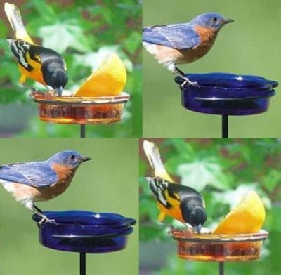 bluebird sphere orange of jelly quick feeder feeders set mealworm view hanger
